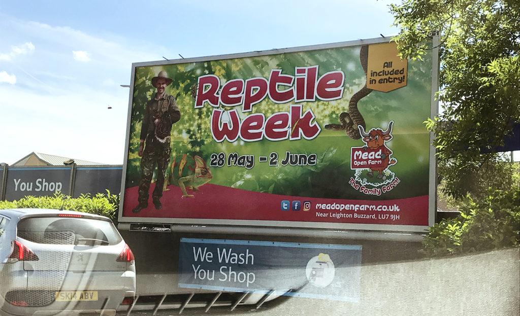 Reptile-Week-1-1024x623